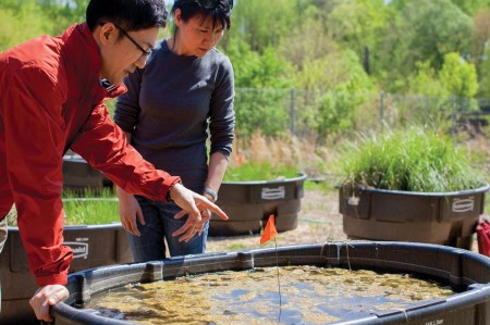 Students in the Environmental Science and Policy class use the wetlands mesocosm compound to engage high schoolers. (MAURICE C. JONES/BROADSIDE)